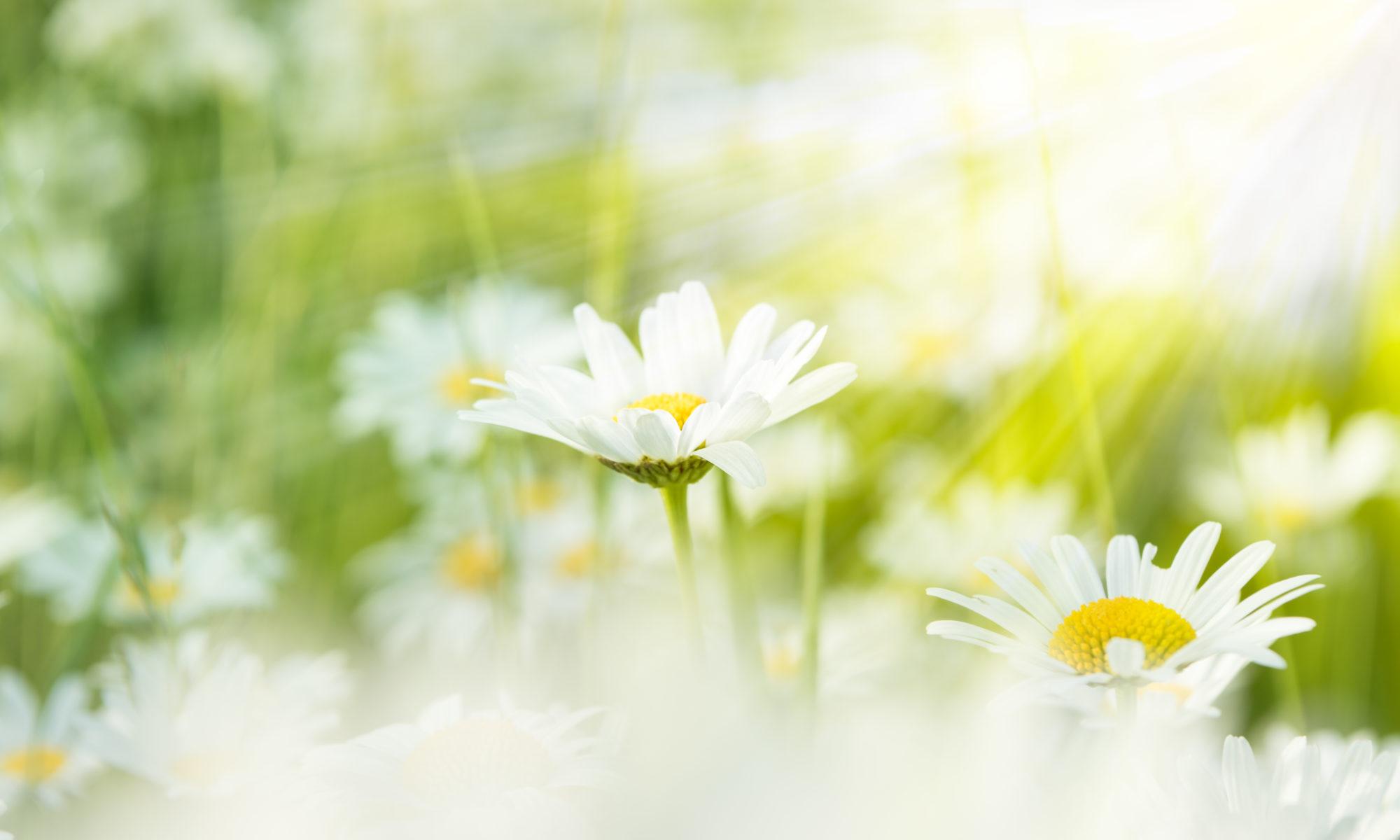 Naturopathie Yoga Thônes